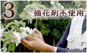 3 摘花剤不使用