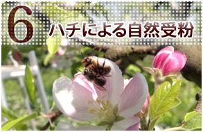 ハチによる自然受粉