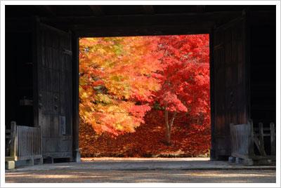 弘前城の紅葉