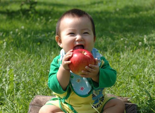 皮ごと丸かじりできる安心なりんごです