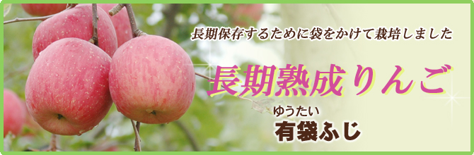 長期保存するために袋をかけて栽培しました 長期熟成りんご 有袋ふじ