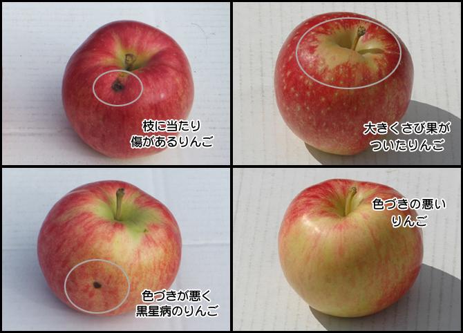加工用りんご