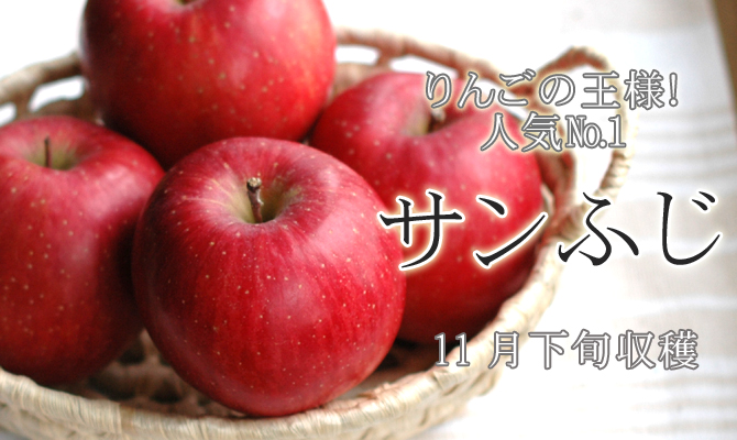 りんごの王様!人気��1 サンふじ 11月下旬収穫