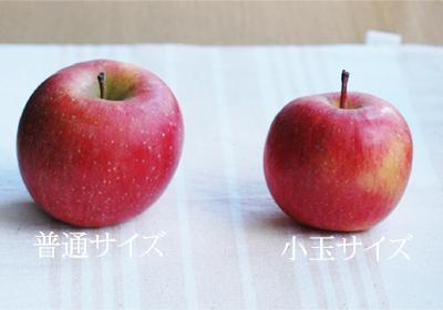 サンふじ【小玉】・普通サイズ比較