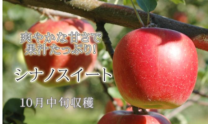 爽やかな甘さで果汁たっぷり!シナノスイート 10月中旬収穫