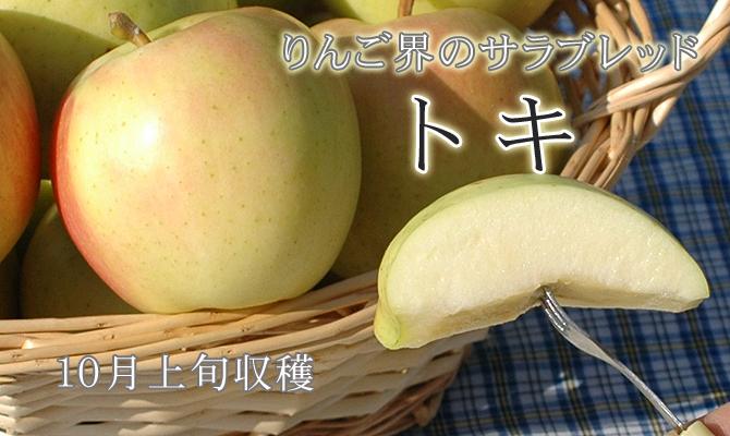 りんご界のサラブレッド トキ 10月上旬収穫