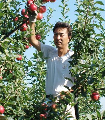 りんご 恋空 収穫