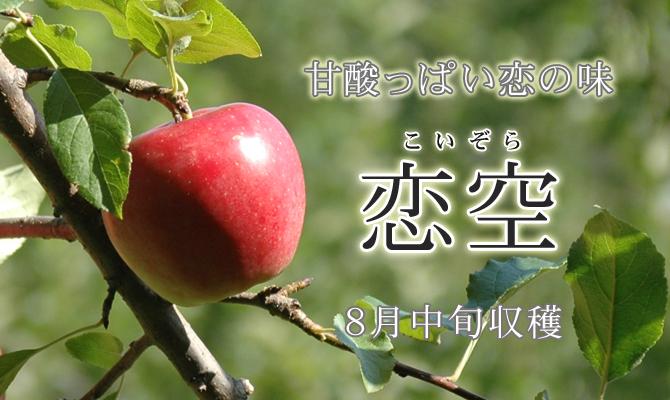 甘酸っぱい恋の味 恋空 8月下旬収穫
