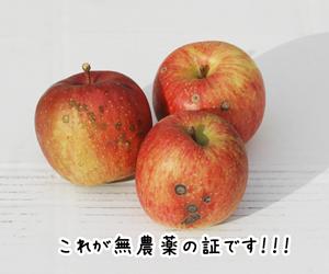 無農薬りんご