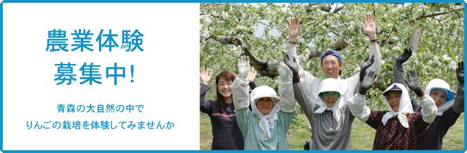 農業体験募集中!青森の大自然の中でりんごの栽培を体験してみませんか