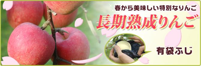 春から美味しい特別なりんご 長期熟成りんご 有袋ふじ