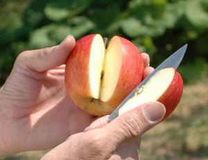 りんごうさぎ 大湯ファーム