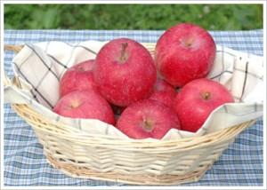 りんごおためしセット