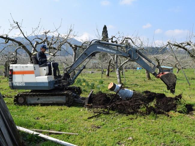 りんごの伐採バックホー
