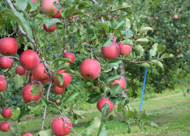 台風りんご2